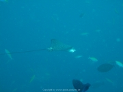 Malediven Tauchsafari 09-2017 - 046