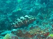 Malediven Tauchsafari 09-2017 - 050