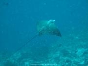 Malediven Tauchsafari 09-2017 - 066