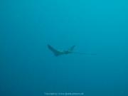 Malediven Tauchsafari 09-2017 - 067