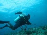 Malediven Tauchsafari 09-2017 - 069