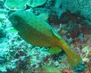 Malediven Tauchsafari 09-2017 - 073