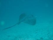 Malediven Tauchsafari 09-2017 - 074