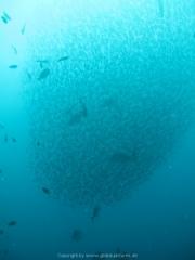 Malediven Tauchsafari 09-2017 - 075