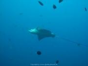Malediven Tauchsafari 09-2017 - 089