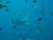 Malediven Tauchsafari 09-2017 - 091