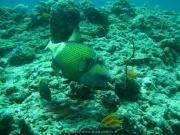 Malediven Tauchsafari 09-2017 - 103