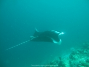 Malediven Tauchsafari 09-2017 - 113