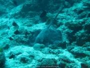 Malediven Tauchsafari 09-2017 - 127