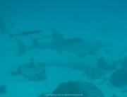 Malediven Tauchsafari 09-2017 - 175