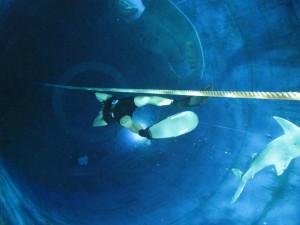 Hinab auf 20m Tiefe