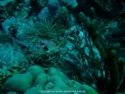 curacao-dive-011