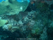 curacao-dive-015