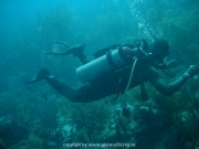 curacao-dive-018