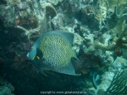 curacao-dive-020