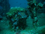 curacao-dive-026