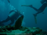 curacao-dive-027