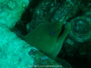 curacao-dive-033