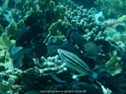curacao-dive-035
