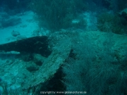 curacao-dive-036