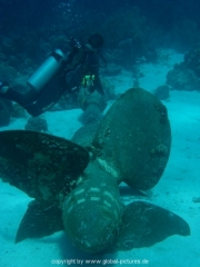 curacao-dive-039