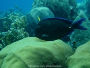 curacao-dive-042