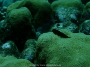 curacao-dive-043