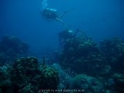 curacao-dive-052