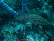 curacao-dive-054