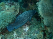 curacao-dive-058