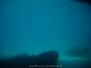 curacao-dive-061