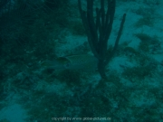 curacao-dive-077