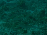 curacao-dive-078
