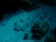 curacao-dive-081