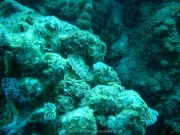 curacao-dive-085