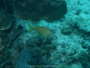 curacao-dive-087