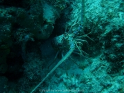 curacao-dive-091