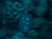 curacao-dive-092