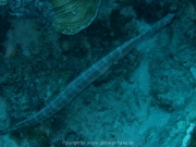curacao-dive-094