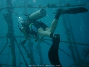 curacao-dive-096