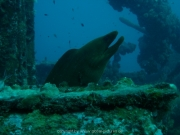 curacao-dive-103
