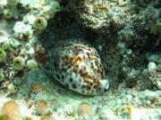 malediven-2013-036