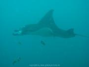 malediven-2013-040