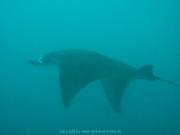 malediven-2013-041