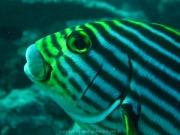 malediven-2013-069