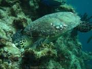 malediven-2013-082
