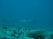 malediven-2013-094