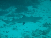 malediven-2013-097