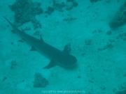 malediven-2013-098