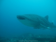 malediven-2013-107